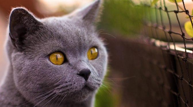 Gatos e Moda