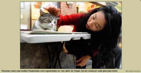 cat-cafe-02