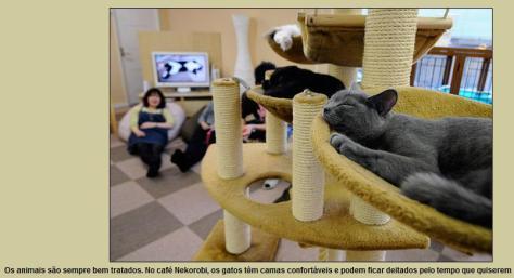cat-cafe-04