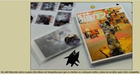 cat-cafe-05