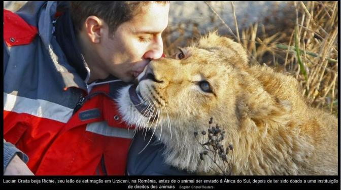 beijo no leão